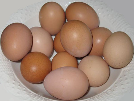Brown Egg Layers