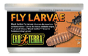 Exo Terra Black Soldier Fly Larvae 1.2oz