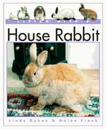 Living With A House Rabbit